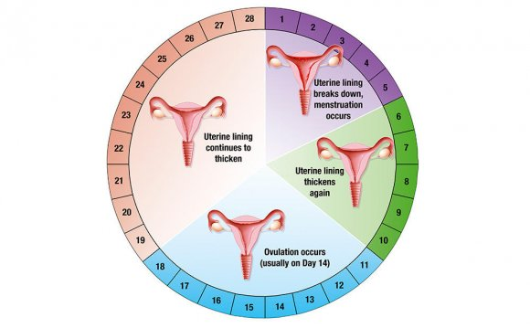 Menstrual cycle diet